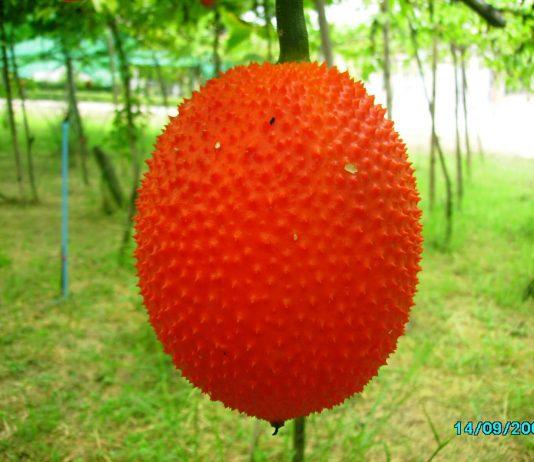 ผลไม้...จากสวรรค์